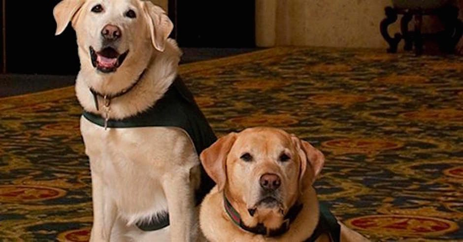 fairmont hotel vancouver dog friendly