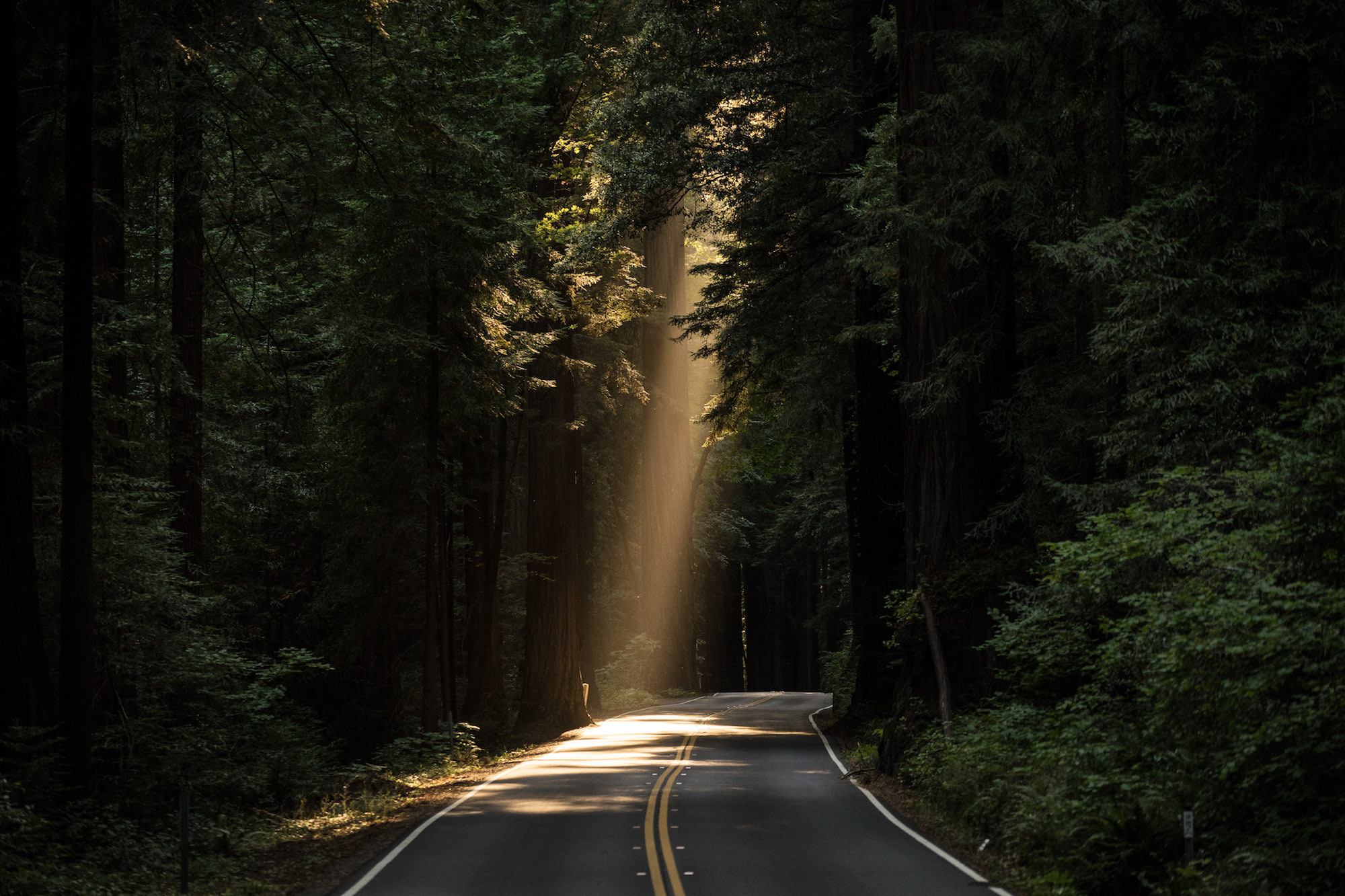 supercar vacation road in forest shining sun