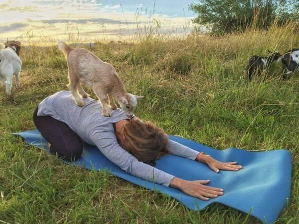 goat yoga victoria bc 4