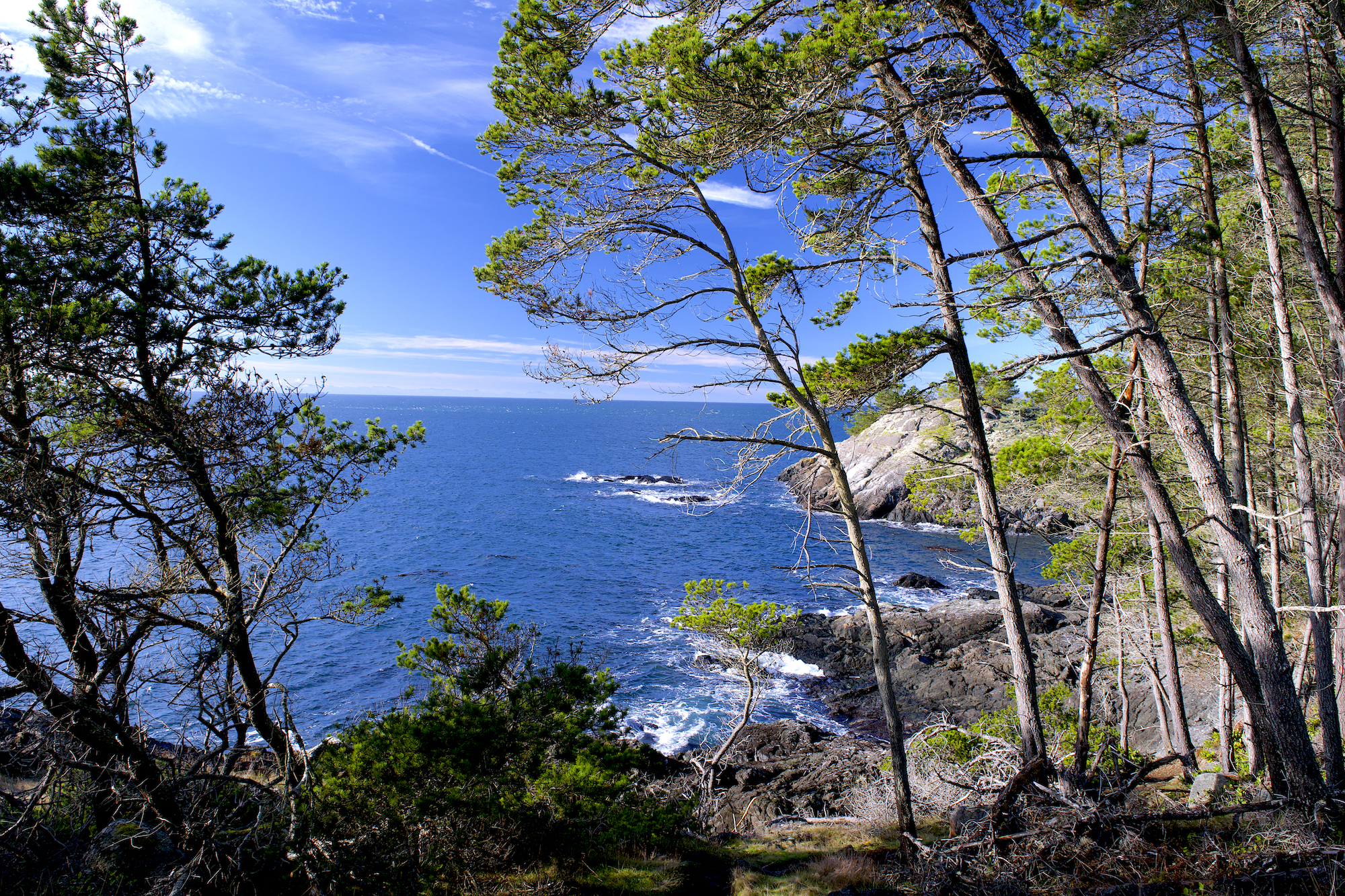 hiking east sooke park vancouver island 4