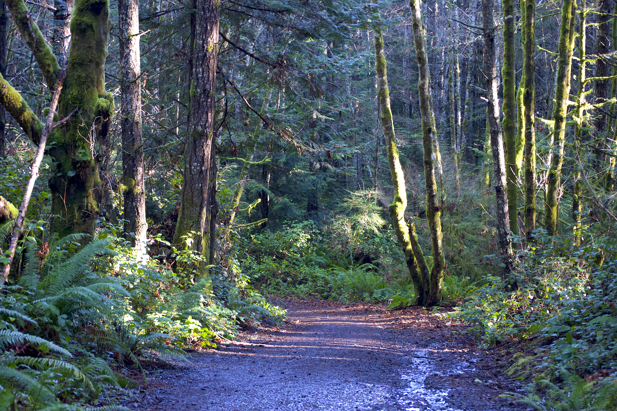hiking east sooke park vancouver island 7