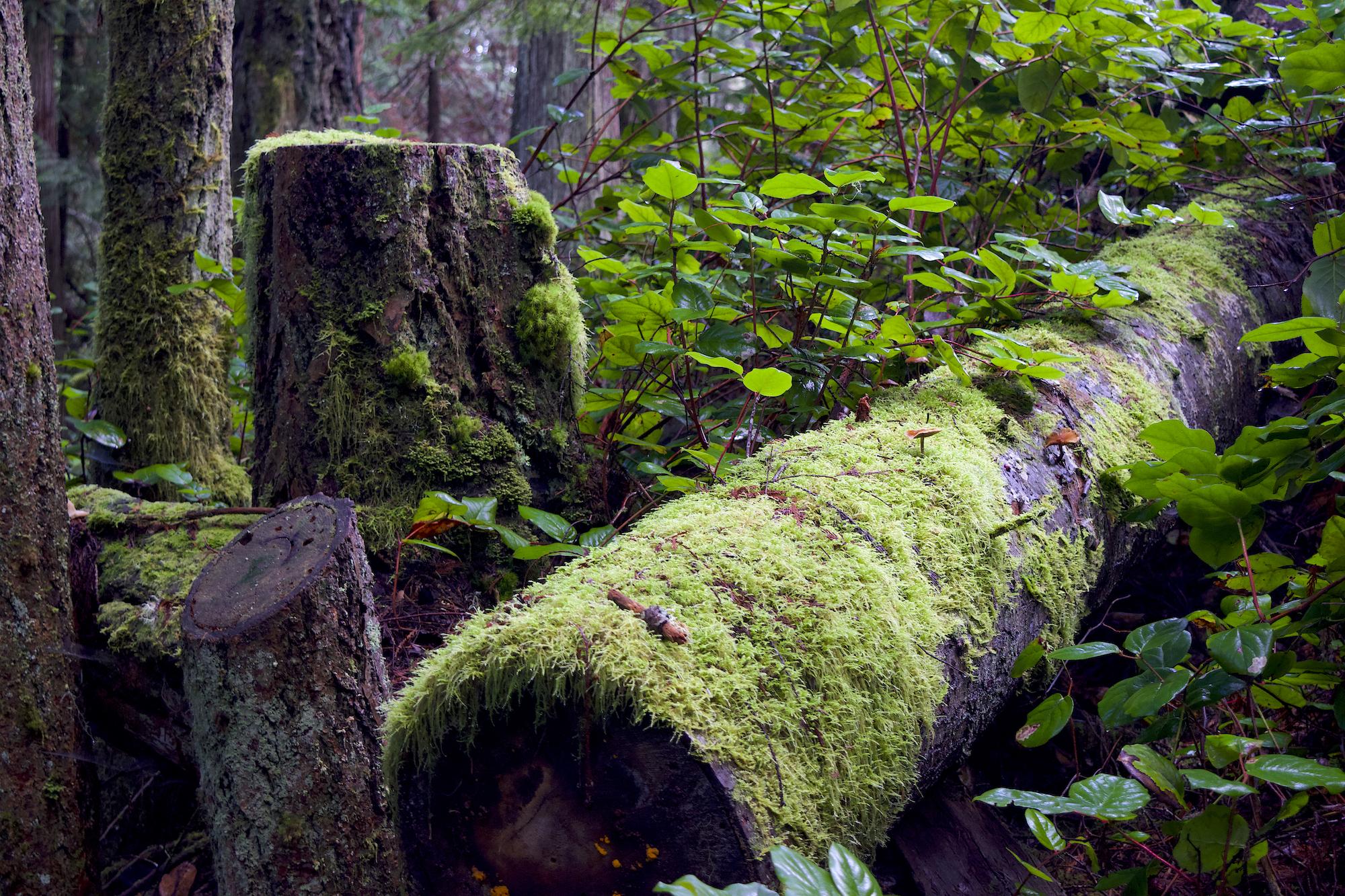 hiking east sooke park vancouver island 8