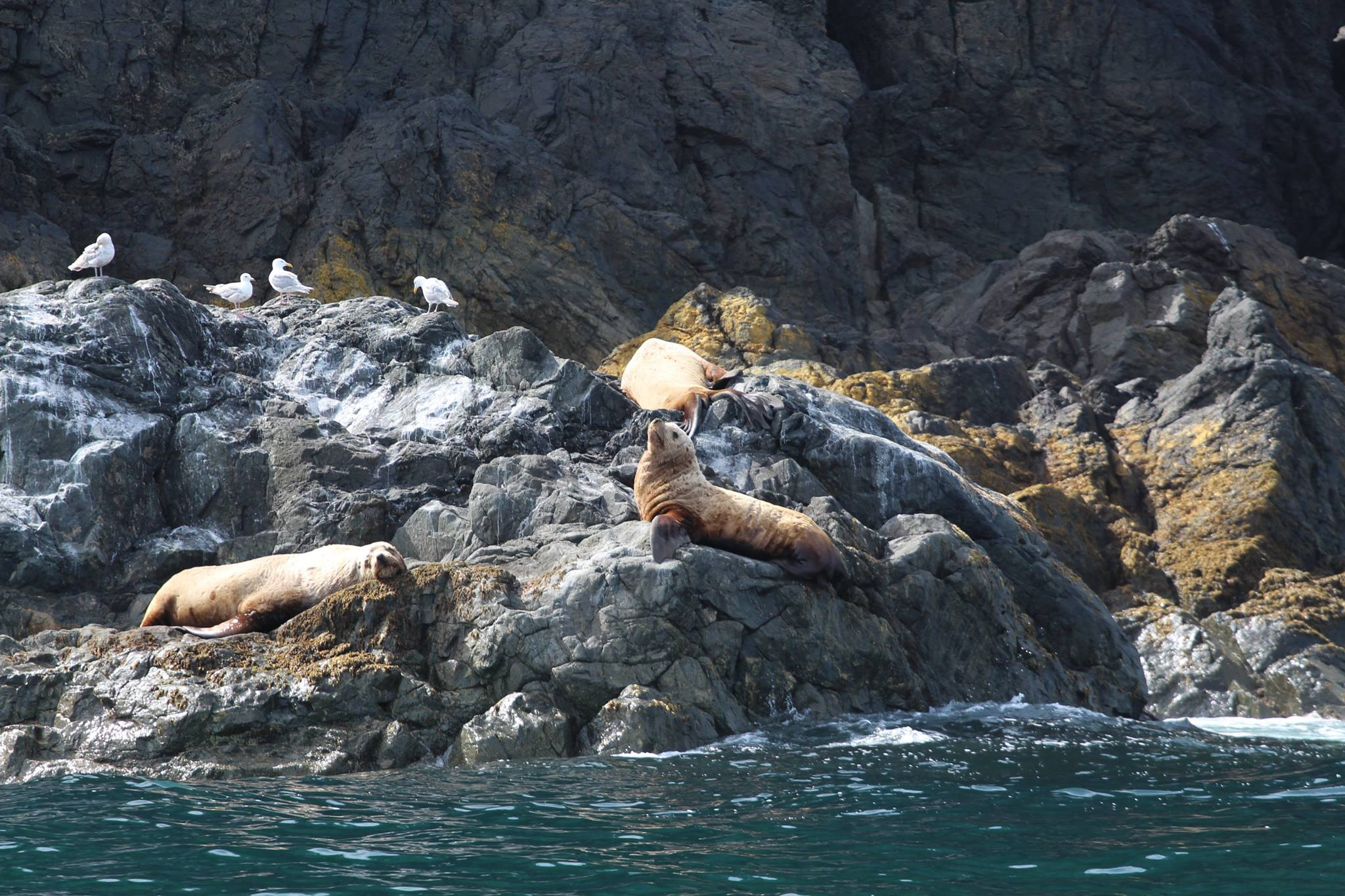 outer shores expedition sea lions